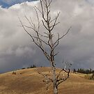 Lone Old Tree by Kathi Huff