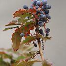Oregon Grape by Kathi Huff