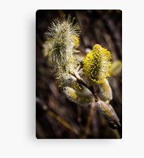 Furry Flower  Canvas Print