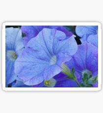Blue Petunia Blossom Sticker