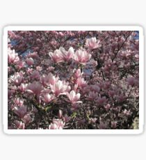 Magnolias Sticker