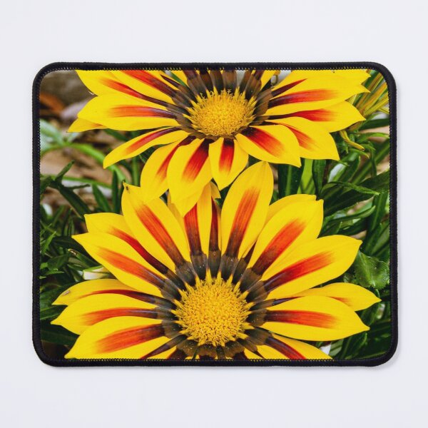 Gazania Giant Yellow Red Stripe flowers Mouse Pad