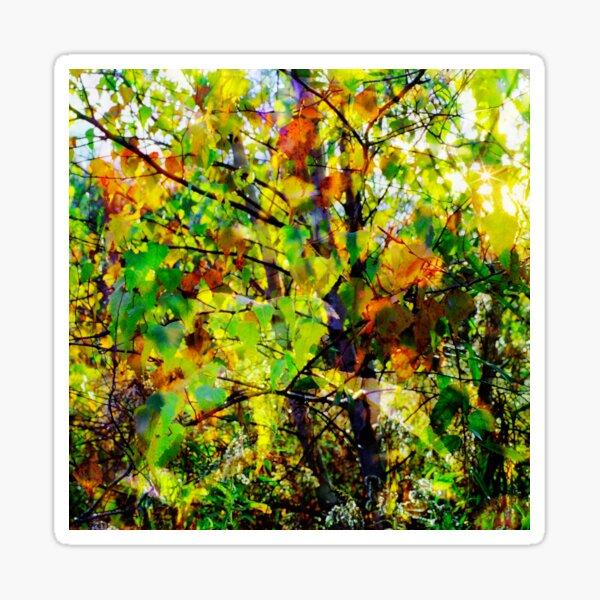 Autumn Birches Sticker