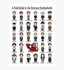 A Field Guide to the Common Cumberbatch (print/poster) Photographic Print