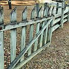 The Old Fence Row by RickDavis