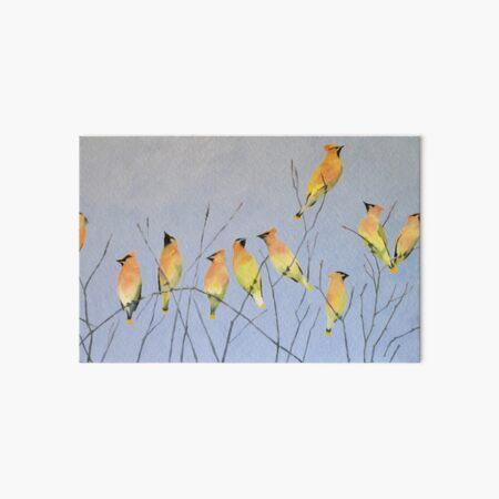 Cedar Waxwings in Winter Art Board Print