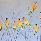 Cedar Waxwings in Winter by lostpineslife
