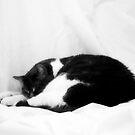 Slumbering Cat by BonnieToll