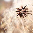 Winter Seeds by BonnieToll