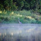 Blue Heron Morning by lostpineslife
