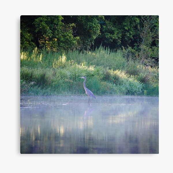 Blue Heron Morning Canvas Print