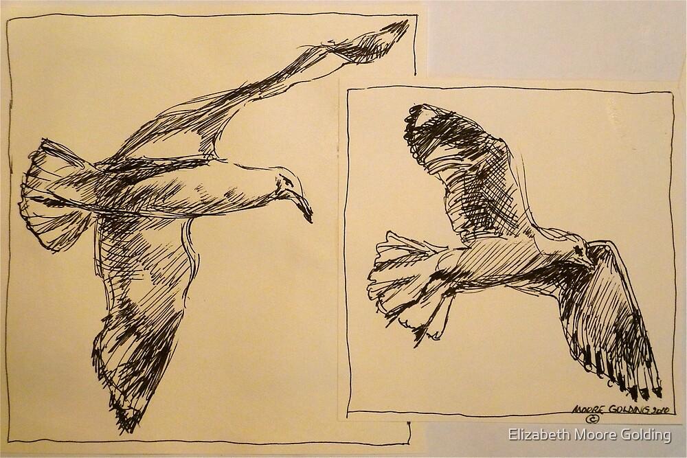 Two flying Seagulls: pen sketch. by Elizabeth Moore Golding