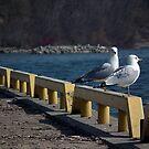 Gulls At The Marina by BonnieToll
