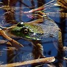 Pond Frog by BonnieToll
