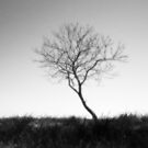 Lonely Tree by BonnieToll