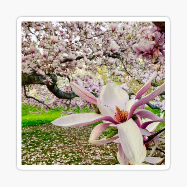Magnolia Forest Sticker