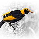 male regent bowerbird by carol brandt