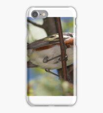 Chestnut Sided Warbler iPhone Case/Skin