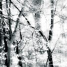 tree breeze by Dorit Fuhg