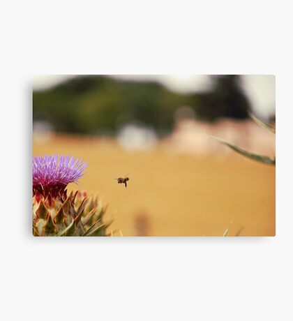 Bee, Thistle and Field of Wheat Canvas Print