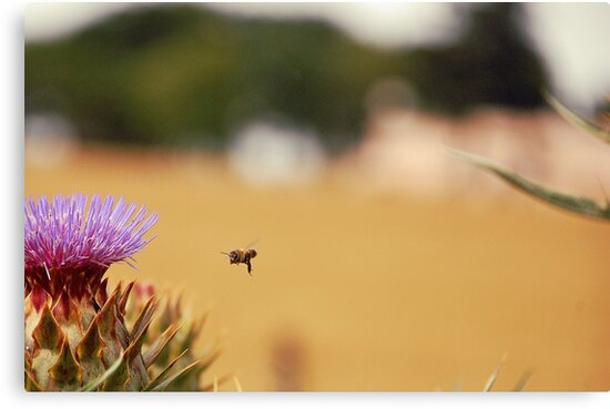 Bee, Thistle and Field of Wheat by Denis Marsili