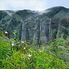 Koolau Orchids by Wendy Roberts