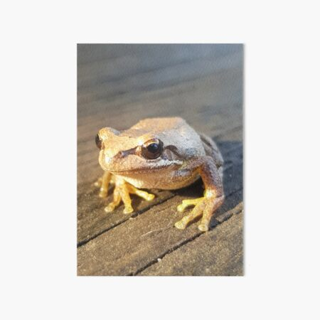 Golden Frog  Art Board Print