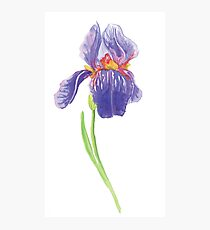 Iris water color painting Photographic Print