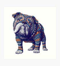 Englische Bulldogge (Farbversion) Kunstdruck