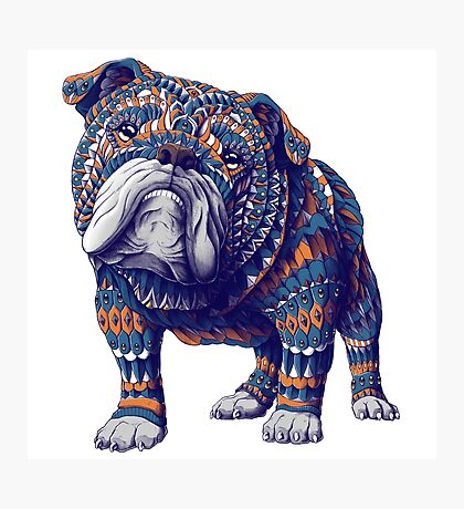 English Bulldog (Color Version) Photographic Print