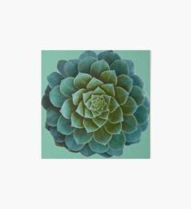 Succulent Art Board