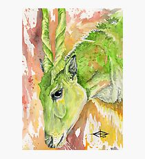 South African Eland Antelope  Photographic Print