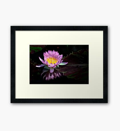 Water Lily, pink and yellow Framed Print