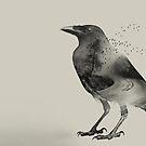 Raven road by Vin  Zzep