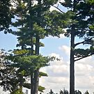 Trees at Boldt Castle, NY, USA by Shulie1