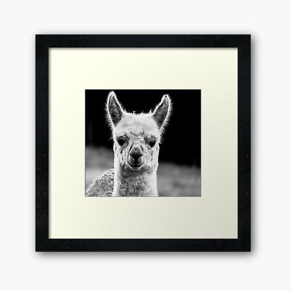 Baby Alpaca Framed Art Print