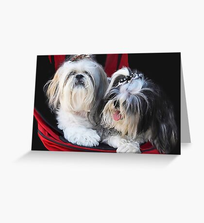 Two Cute!! Greeting Card