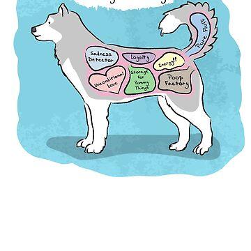 Anatomy of a Husky by MommySketchpad