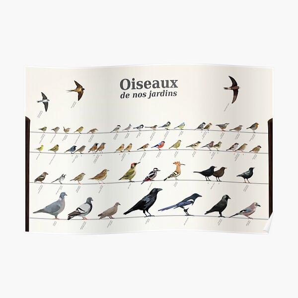 Birds of French gardens Poster