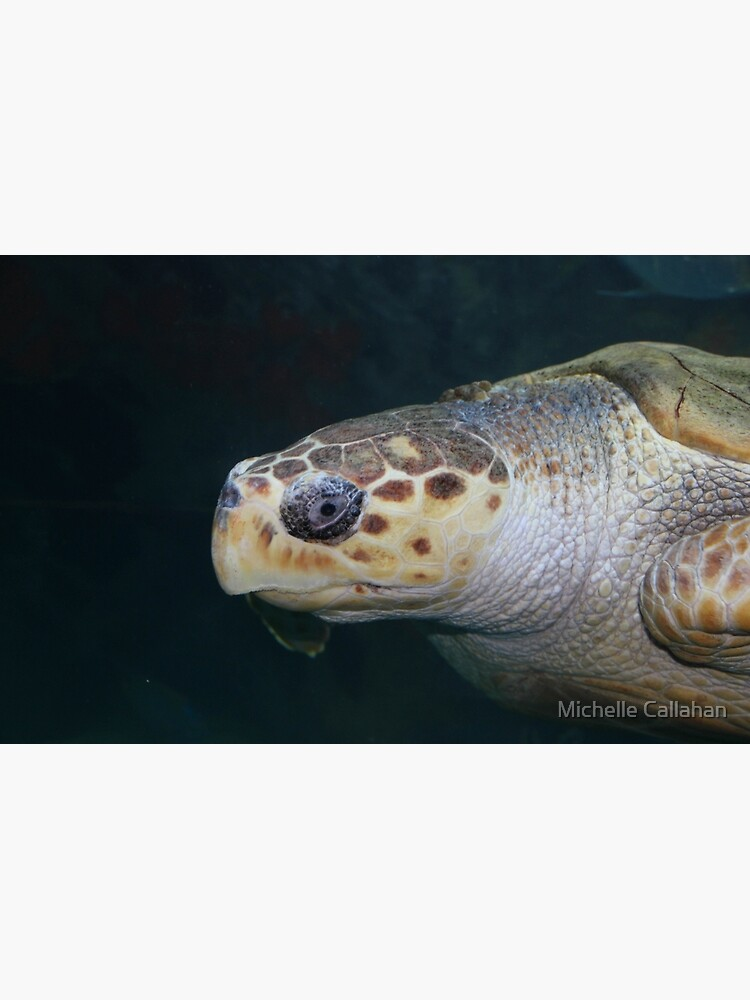 Turtle by MichellesPhotos