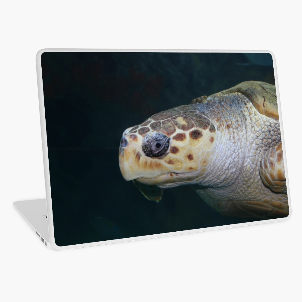 Turtle Laptop Skin