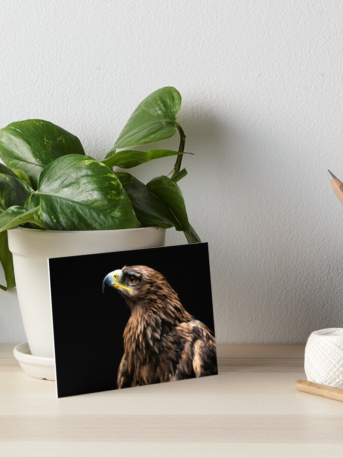 Tawny Eagle Art Board Print By Yampimon Redbubble