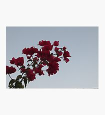 Contrast fowers Photographic Print
