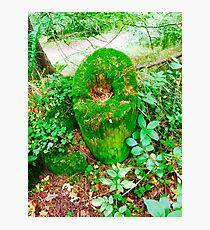 Moss stump Photographic Print