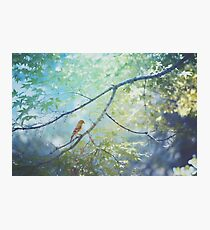 Goldfinch, Green, and Blue Photographic Print