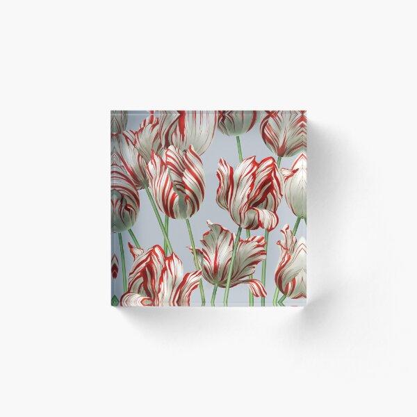 Tulipomania - The Semper Augustus Acrylic Block