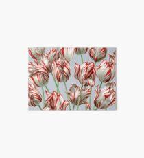 Tulipomania - The Semper Augustus Art Board