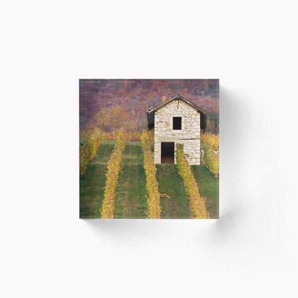 Autumn light in the vineyard Acrylic Block