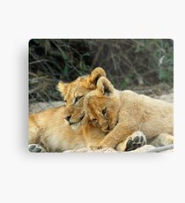 Cute or What!! Metal Print