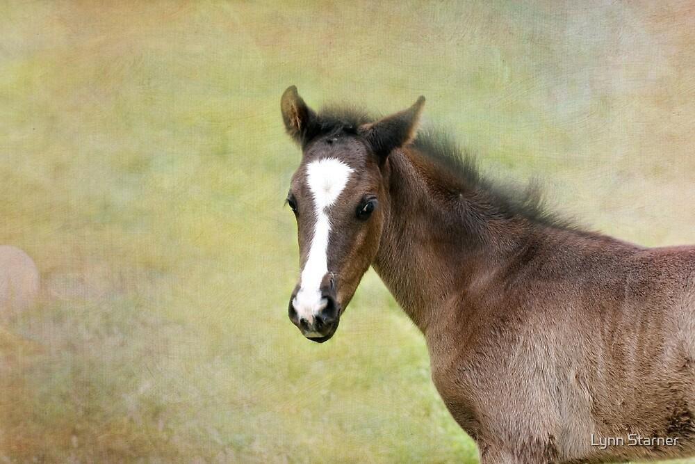 Beautiful baby by Lynn Starner